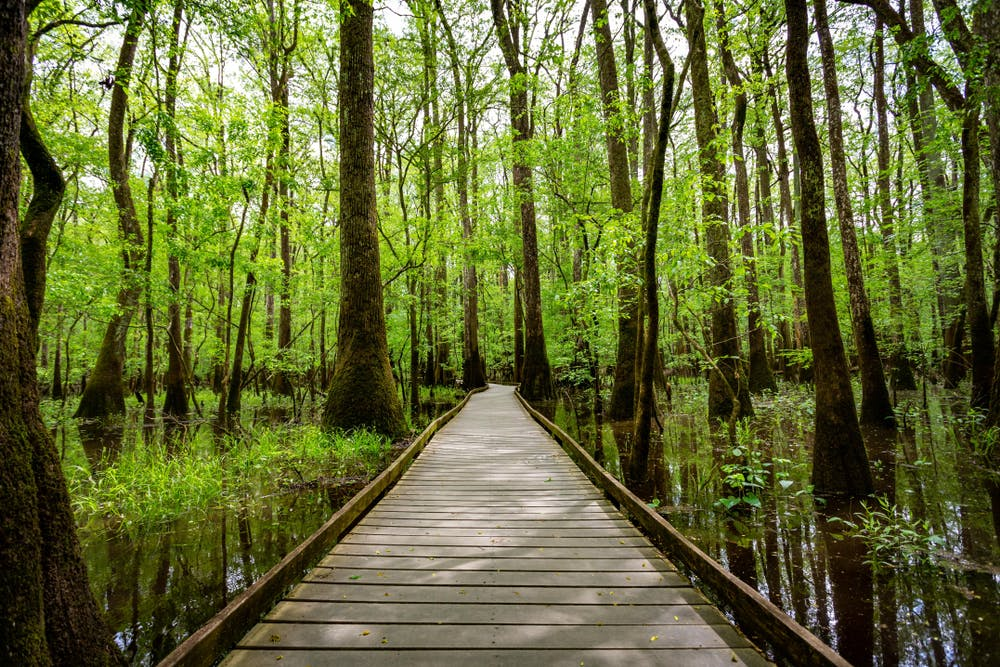 A Guide to Congaree National Park | RVshare.com