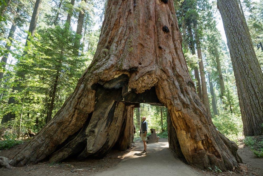 A Guide to Redwood National Park | RVshare.com