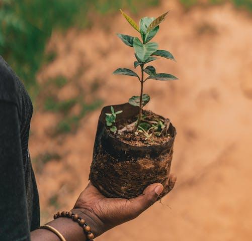 One Tree Planted project in Rwanda