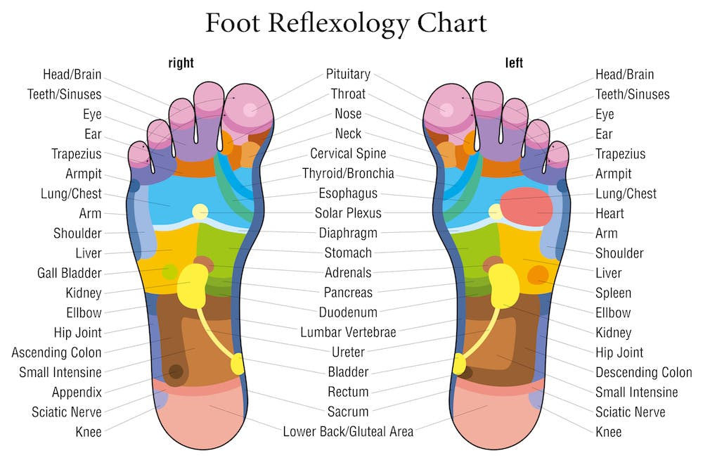 foot reflexology chart with the pressure points of the foot labeled