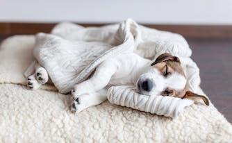 stressed dog sleeping on bed