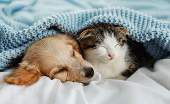 dog and cat sleeping under cozy blanket