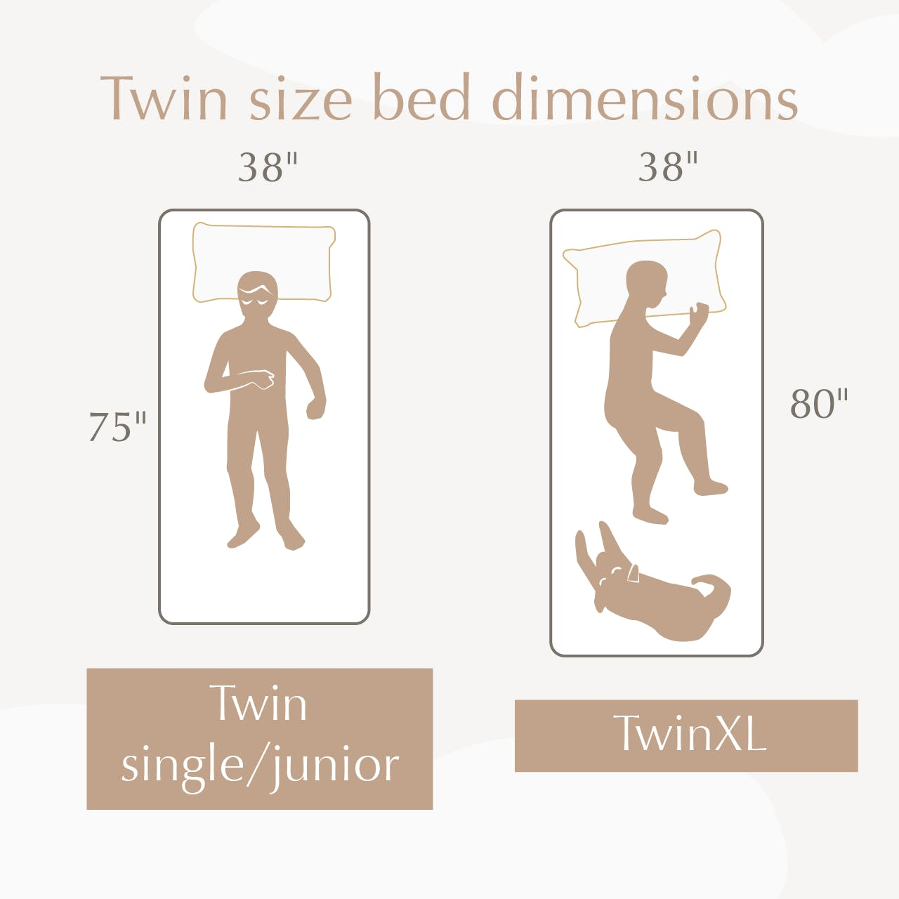illustration showing the differences between twin vs twin xl bed sizes