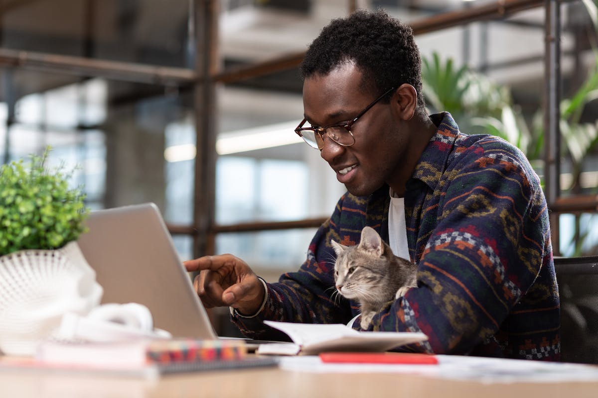 person working on laptop with cat on lap