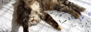 cat sleeping with arms overhead and belly exposed