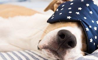 image of napping dog