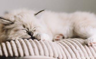 image of sleeping cat