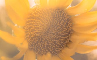 how to wake up looking refreshed - image of sunflower
