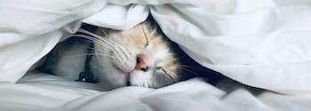 image of cat sleeping in bed