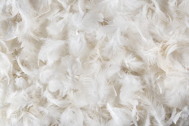 image of pillow feathers