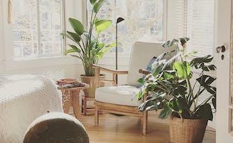 image of best plants to help sleep