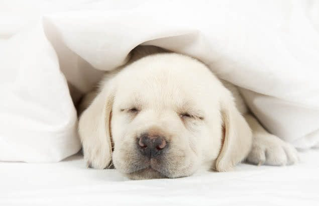 puppy sleeping in bed