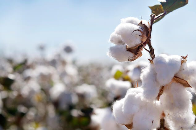 non toxic mattress - image of organic cotton