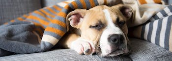 image of dog sleeping on couch