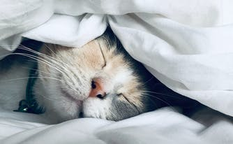 how to keep warm in bed without heat - image of kitten under covers