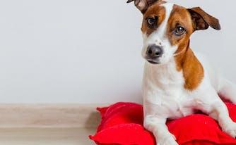 image of dog lying on pillow