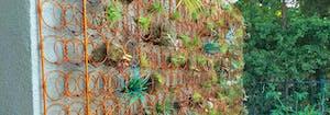 image of repurposed mattress springs as plant trellis