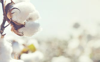 image of cotton flower - difference between organic vs cotton