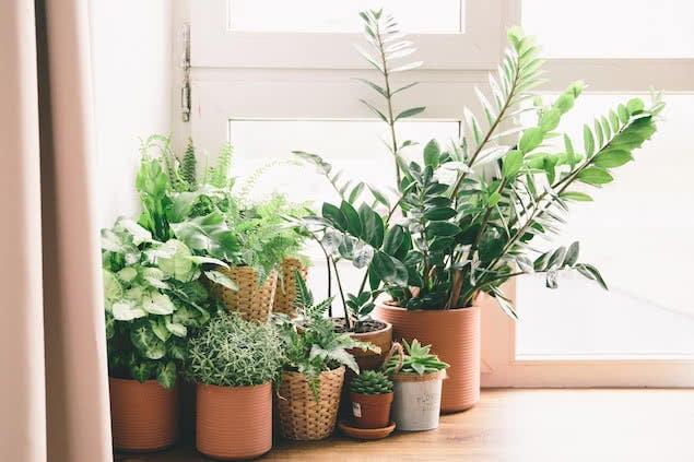 houseplants on windowsill in bedroom