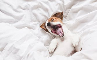 dog sleeping positions - image of dog in bed