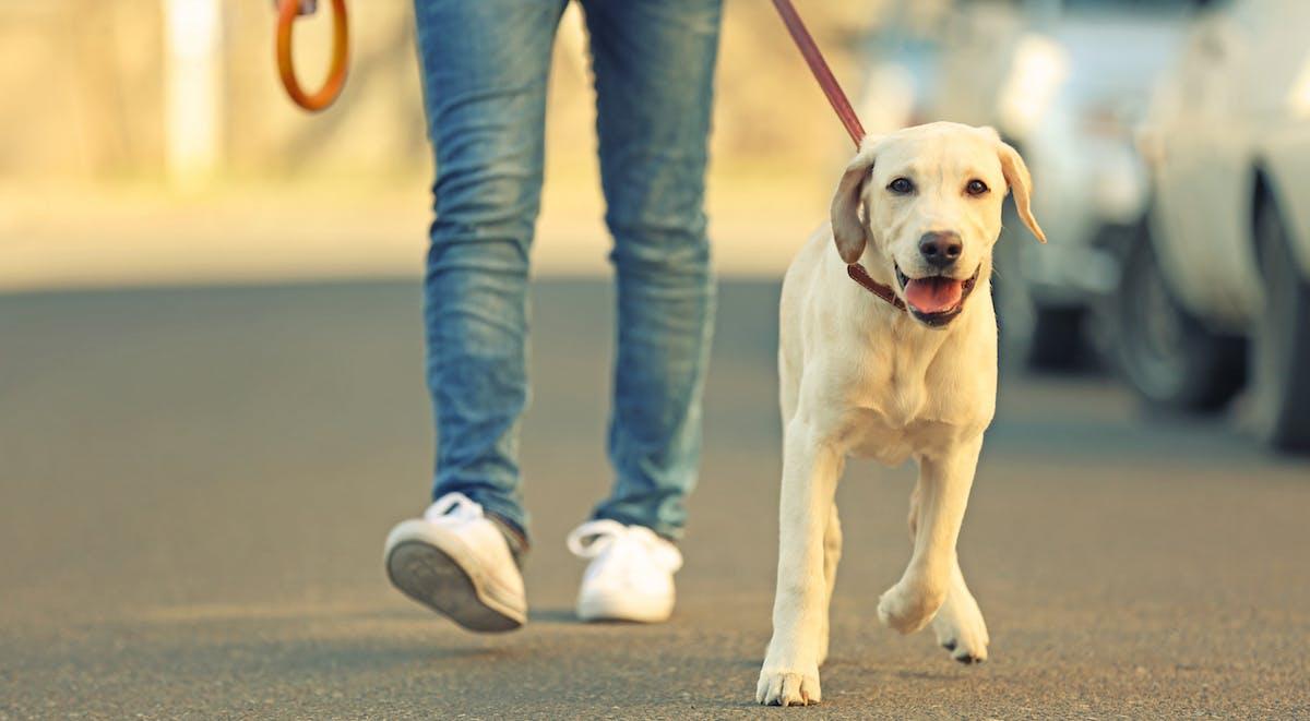 person walking dog as part of regular routine