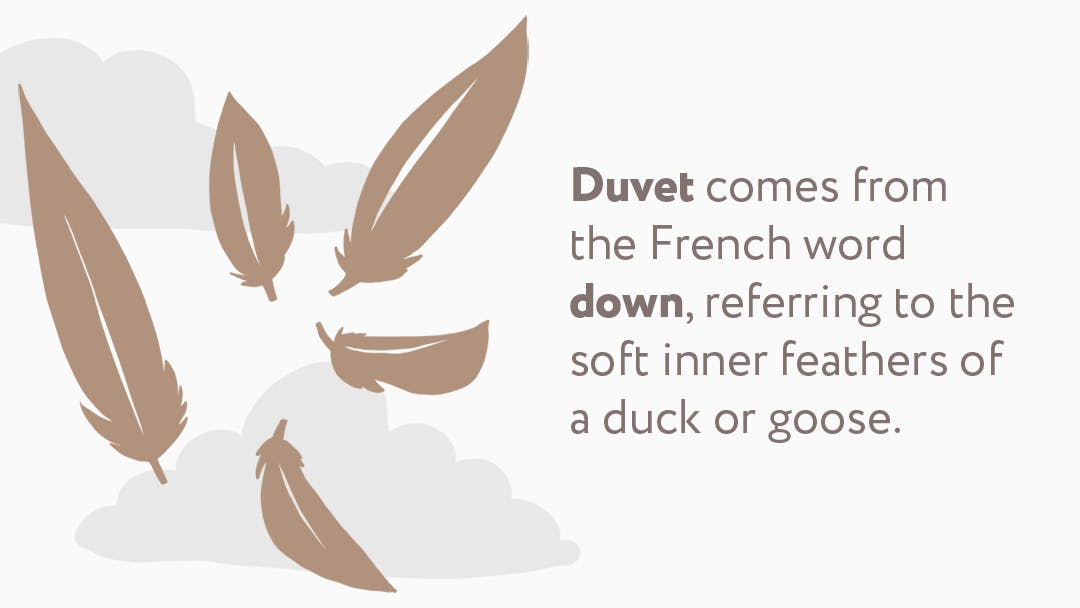 illustration of down feathers in a duvet, with a caption on it reading: Duvet comes from the French word down, referring to the soft inner features of a duck or goose.
