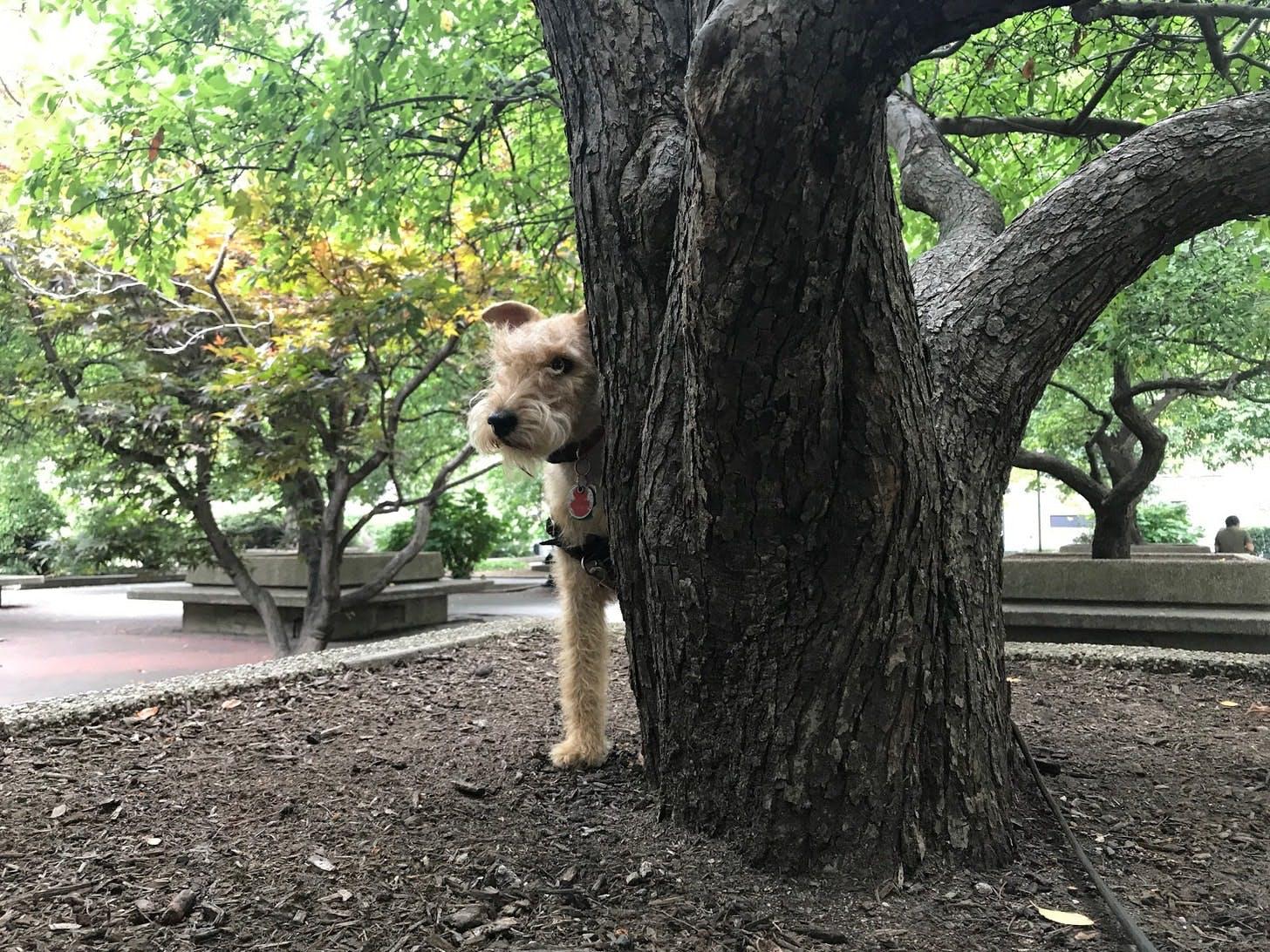 Tulip, the Dog
