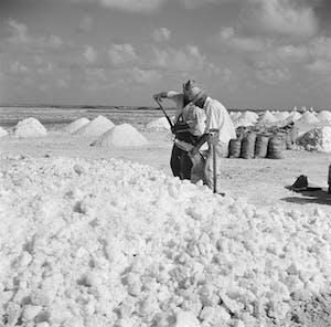 Salt production Bonaire 4- Wikipedia