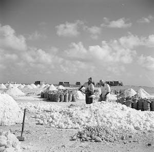 Salt production Bonaire 2- Wikipedia