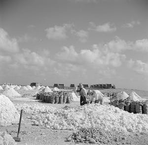Salt production Bonaire 5 - Wikipedia