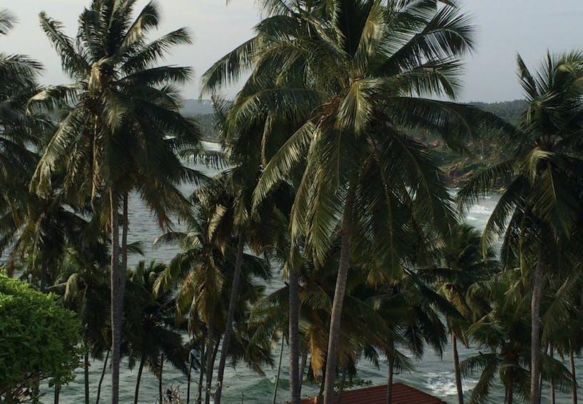 Sharvan Kumar for SEEMA Kerala coconut trees