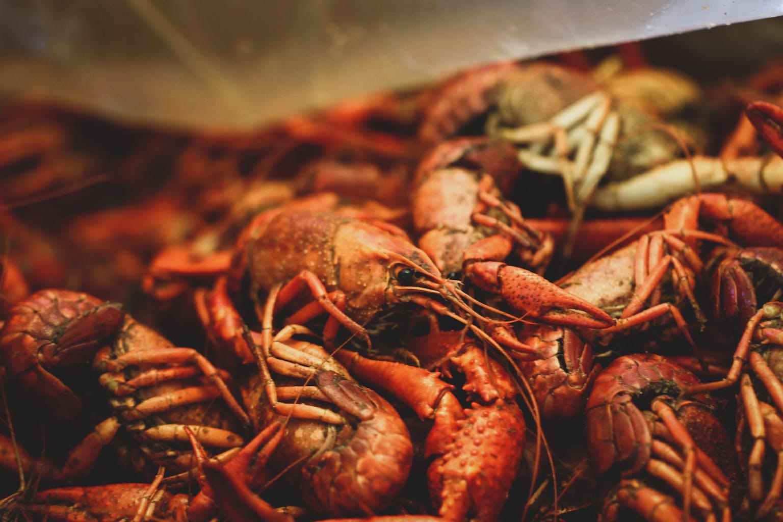NOLA, New Orleans food, seema food, seema.com, seema network, seema spices, seema 2020, seema trends, seema newsletter, Mardi Gras, Mardi Gras 2020