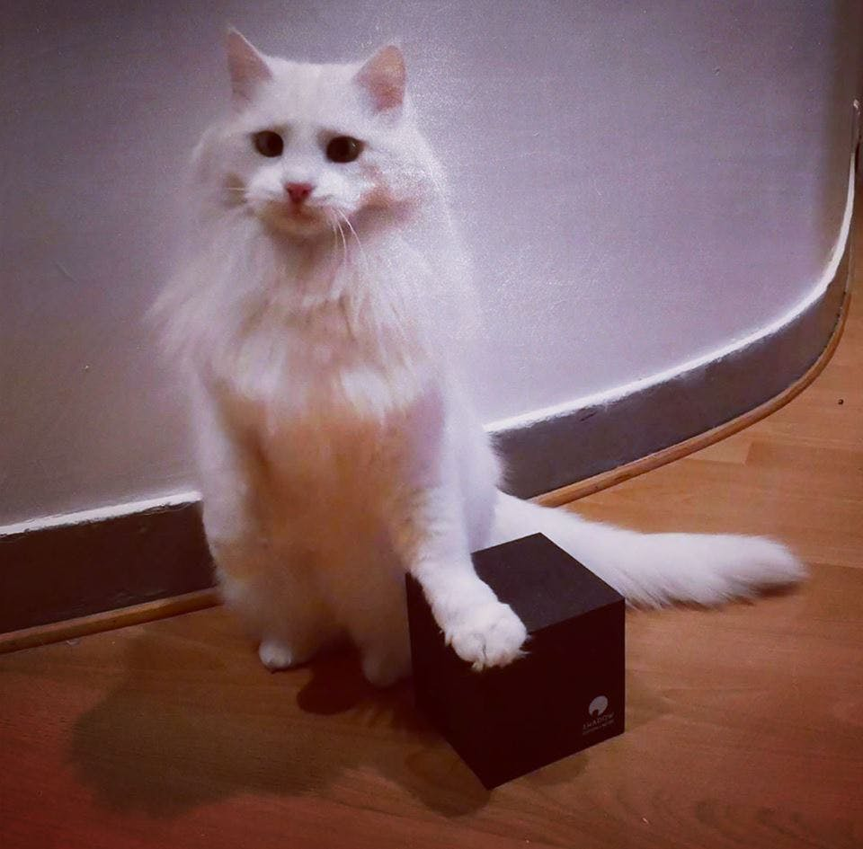"This was our first box! The OG ""Shadow Box"" With the world's most beautiful cat."