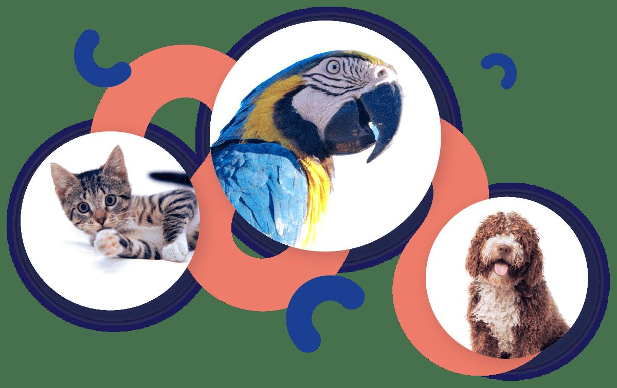 Foto di gatto, cane e pappagallo