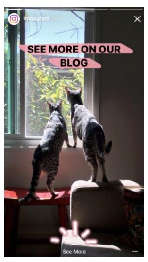 Skärmklipp från instagram's instagram story där två katter tittar ut genom ett fönster