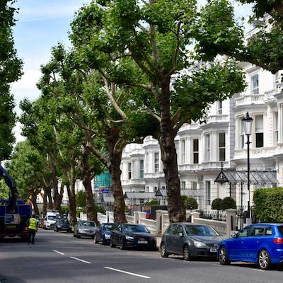 The London plane - a natural survivor in the city