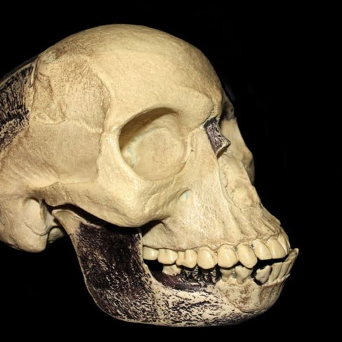 Piltdown Man - a very British hoax