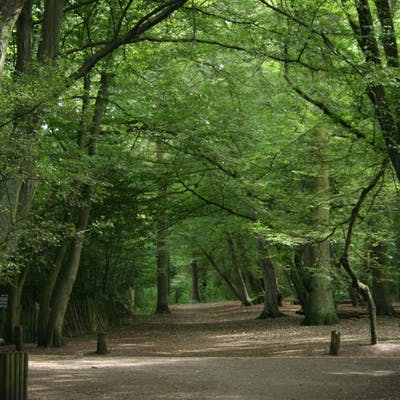 The (almost) vanished great Forest of Middlesex