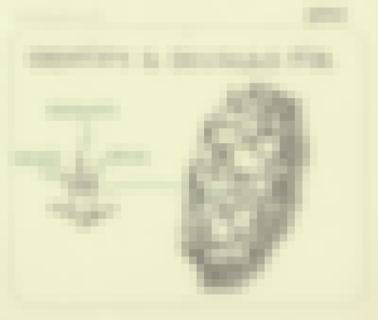 Identify a Douglas fir - Sketchplanations