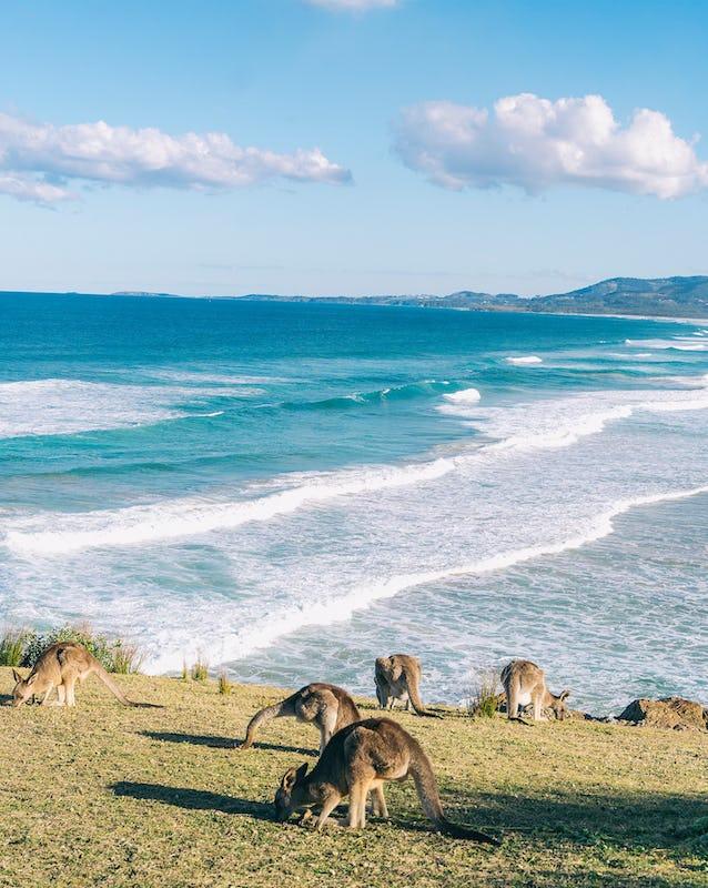 Scenic coastline along Emerald Beach on Coffs Harbour