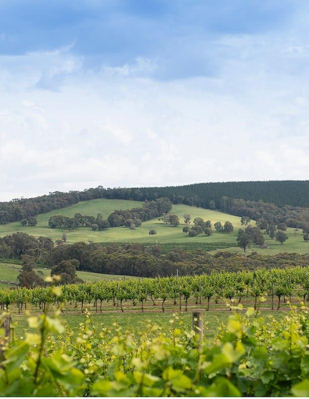 Scenic views across Courabyra Wines vineyard in Tumbarumba.