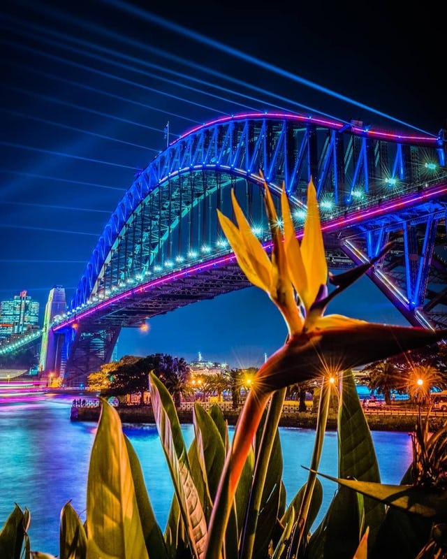Sydney Harbour Bridge from low angle with Kangaroo Paw in front.