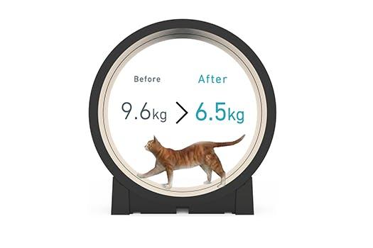 trends - workout voor je kat