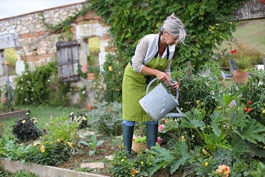 Tuin klaar voor de herfst - zaaien, planten en oogsten