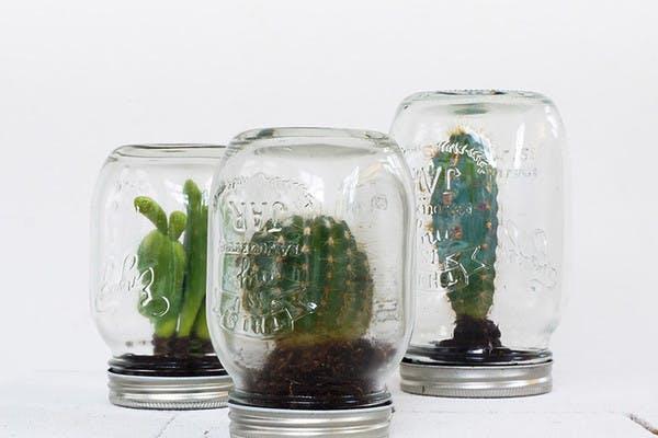 DIY - cactus