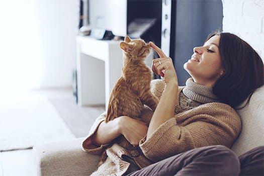 interieur-trends voor katten