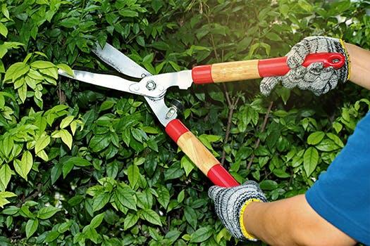 Tuin klaar voor de herfst - snoei hagen en planten