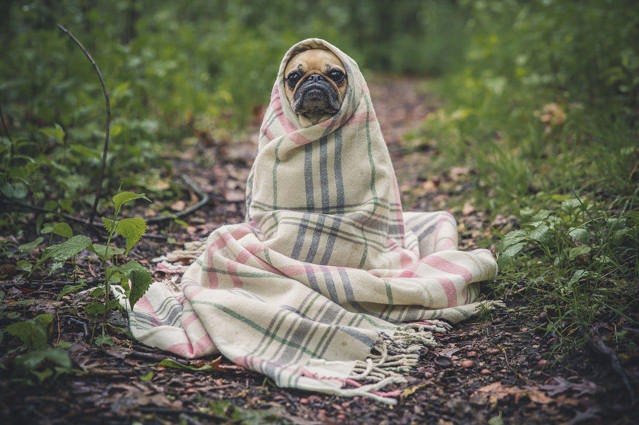 In Decke gewickelter Hund