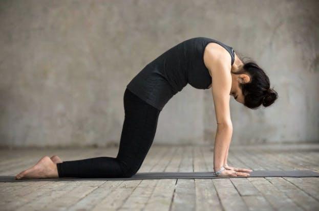 cat cow yoga stretch pose
