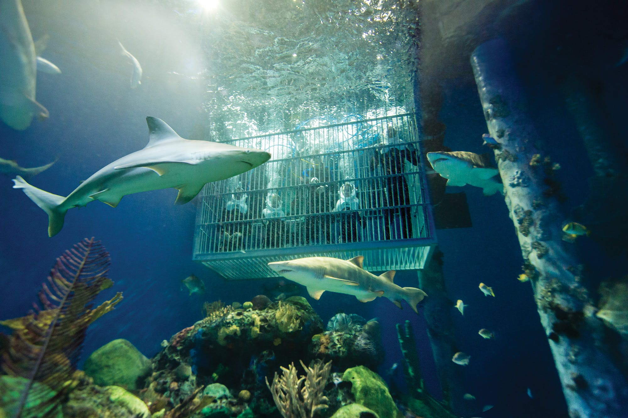 Wonders of Wildlife Out To Sea Shark Dive